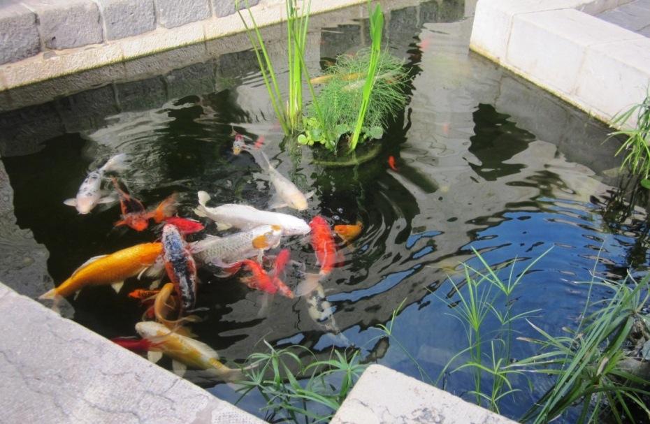Vasca Da Esterno Pesci : Vasca per pesci da giardino. awesome acquario zen with vasca per